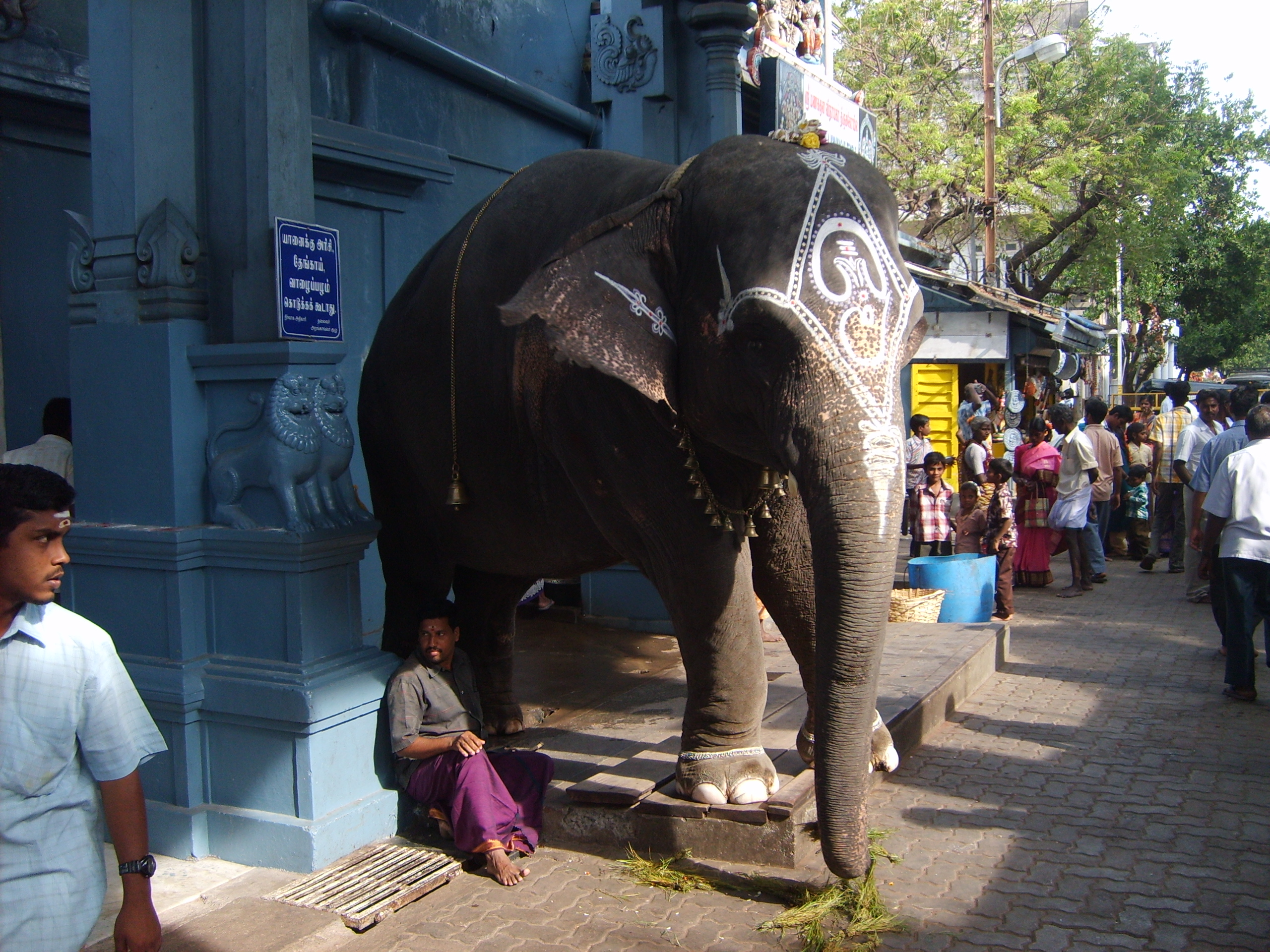 Temple elephant Lakshmi in Pondicherry